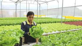 Vegetables grown in a glass house. The Vietnamese economy was growing but needed to find new drivers for growth, experts said. (Photo: VNA)