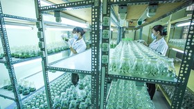 Staff work at a centre that applies scientific and technological advances to create new strains of plants in the Mekong Delta's Kien Giang Province. (Photo: VNA/VNS)