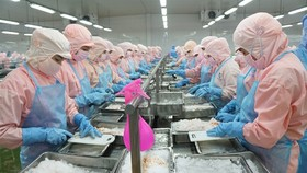 Shrimps are processed at Minh Phu Seafood Group. Vietnam expects to reach growth targets this year. (Photo: thuysanvietnam.com.vn)