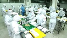 Processed food production at CJ Cau Tre Company. (Photo: SGGP)