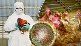 Cambodia recently reported the first outbreak of H5N6 bird flu virus among the country's poultry (Source: Cambodia News English)