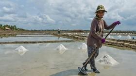A salt field in Kampot (Source: opendevelopmentcambodia.net)