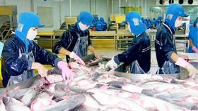 Chế biến cá tra xuất khẩu