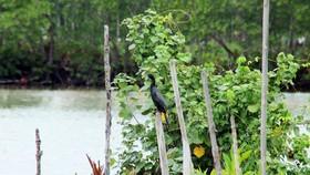 Cồng cộc là loài chim có giá trị về khoa học và du lịch