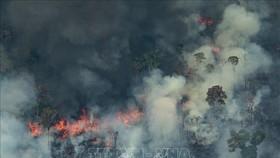 Khói lửa bốc lên từ đám cháy tại rừng Amazon ở Porto Velho, bang Rondonia, miền Tây Bắc Brazil. Ảnh: AFP/TTXVN