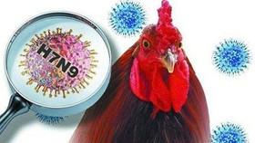 Nhiều chủng virus cúm mới lạ đang rình rập