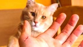Cậu bé 11 tuổi tử vong vì mèo cào!