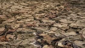Cá chết khô khi lòng hồ thủy lợi tại Thừa Thiên Huế bị hoang mạc hóa