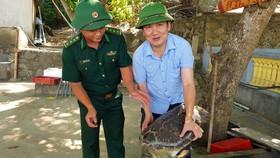 Con rùa biển vẫn sống khỏe mạnh trước lúc thả về môi trường tự nhiên