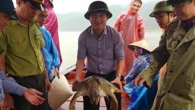 Con rùa biển nặng 22kg