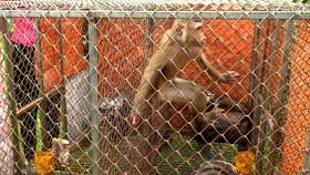 Các cá thể động vật hoang dã khỏe mạnh trước lúc được thả về rừng