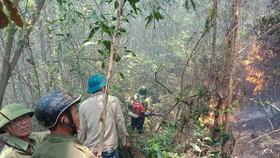Khu vực hiện trường xảy ra cháy rừng