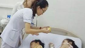 Hai học sinh ở Hà Tĩnh phải nhập viện do ăn phải hạt ngô đồng có chứa các hợp chất gây độc
