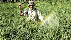 Tập huấn sử dụng thuốc bảo vệ thực vật có trách nhiệm