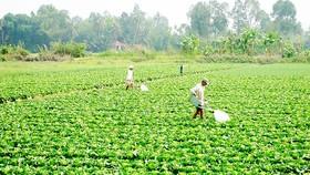 Tăng thu nhập từ chuyển đổi cây trồng