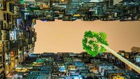 Mầm sống - tác phẩm đoạt giải nhất Festival Nhiếp ảnh trẻ 2017