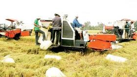 Thu hoạch lúa ở Đồng bằng sông Cửu Long. Ảnh: CAO PHONG