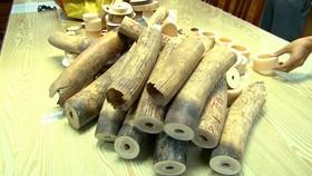 Thu giữ hơn 200kg ngà voi