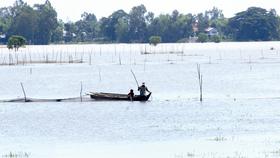 Giăng lưới bắt cá quanh cánh đồng trên đất nhà, vừa cải thiện bữa ăn vừa kiếm thêm tiền chợ