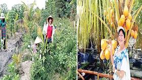 Đi hái trái cây, rau vườn các loại ở Sài Gòn