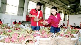 Xuất khẩu nông sản sang Trung Quốc - Chất lượng, thương hiệu là hàng đầu