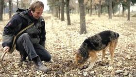 """Chó săn đã được huấn luyện """"thành chuyên gia"""" tìm kiếm nấm cục"""