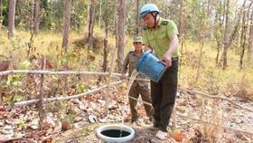 Bồn chứa nước chôn sẵn trong rừng để sẵn sàng chống cháy rừng