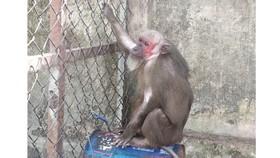 Đồng Nai: Bàn giao 6 cá thể khỉ về trung tâm cứu hộ