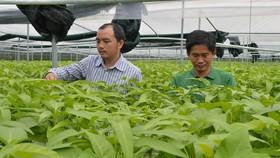 Doanh nghiệp trong nước đầu tư mạnh vào lĩnh vực nông nghiệp