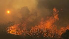 Thêm nhiều người chết trong thảm họa cháy rừng ở Mỹ