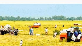 Cơ hội lớn từ hạt gạo