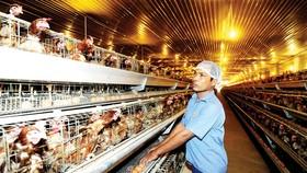 Hình thành chuỗi cung ứng để giảm chi phí trung gian
