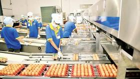 Chuẩn bị các mặt hàng thiết yếu phục vụ người tiêu dùng dịp Tết Mậu Tuất                                  Ảnh: CAO THĂNG