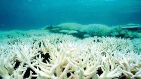 Lá chắn bảo vệ san hô