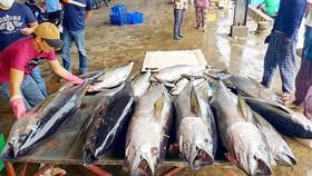 """EC ra điều kiện rút """"thẻ vàng"""" cho thủy sản Việt Nam"""