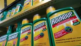 Thuốc diệt cỏ Roundup của công ty hóa chất Mỹ Monsanto. (Nguồn: aljazeera.com)
