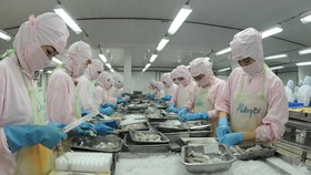 Chế biến tôm xuất khẩu của một doanh nghiệp tại khu vực phía Nam                                                                       Ảnh: CAO THĂNG