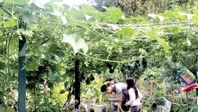Vui như người Việt làm vườn
