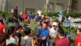 Tình nguyện viên trao tặng cây cho người dân. Nguồn: NHIPCAUDAUTU.VN