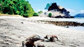 Indonesia muốn tạm đóng cửa đảo Komodo