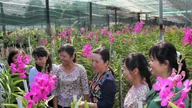 Rực rỡ sắc màu tại Festival Hoa lan TPHCM