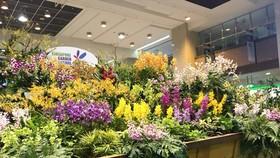 Bồn hoa lớn nhất thế giới