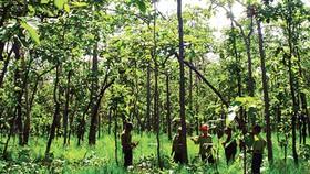 Sắp xếp, đổi mới, nâng cao hiệu quả hoạt động của công ty nông, lâm nghiệp