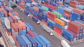 Hàng ngàn container phế liệu tồn tại cảng Cái Mép - Thị Vải