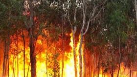 Cháy rừng ở Australia. Ảnh: ABC.