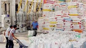 Giá lúa, gạo ổn định