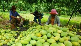 EU bắt đầu kiểm tra chặt chẽ nông sản Việt Nam từ 1-9