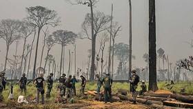 Brazil sẽ thuê các lực lượng cảnh sát môi trường để giám sát các đám cháy ở rừng Amazon