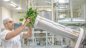Biến rau thải loại thành thực phẩm bổ sung