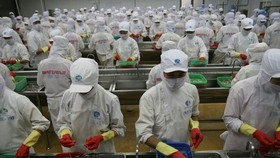A shrimp processing line of Minh Phú Seafood Corporation. — Photo cafef.vn